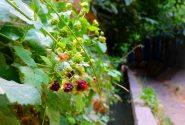 زیبایی های کوچه باغ های سولقان